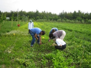 lavori-agricoli