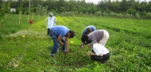 Le Commissioni Lavoro e Agricoltura della Camera approvano risoluzione contro il caporalato e il lavoro irregolare agricolo