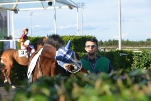 presentazione cavalli tondino