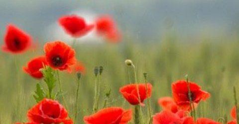 Festa della Liberazione, la nostra gratitudine e il riconoscimento dei valori di quella lotta e di quel sacrificio