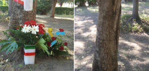 """""""Vandalizzato"""" l'albero di Paolo Borsellino a Villa Gorgia a Lentini, scomparsi fiori e nastrini tricolori"""