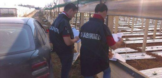 Il Nil dei Carabinieri denuncia imprenditore agricolo, un falso lavoratore e il commercialista per truffa di 40 mila euro all'Inps