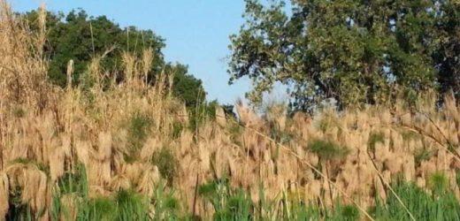 Come si fa morire uno degli angoli più suggestivi del territorio siracusano e di grande valore naturalistico: il Ciane