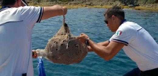Augusta, la Guardia Costiera recupera e rimette in acqua 500 ricci di mare frutto dell'opera di pescatori di frodo
