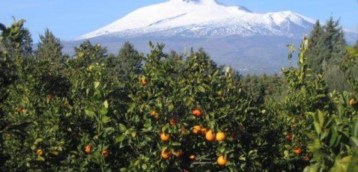Lavoratori agricoli, la Cgil convoca un'assemblea della zona agrumetata per chiedere alla Regione ammortizzatori in deroga