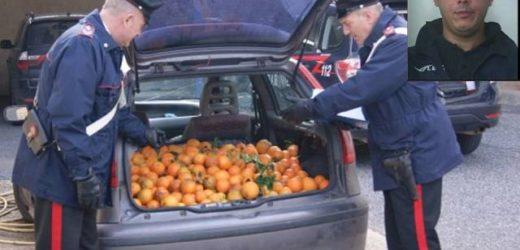Ruba 500 kg di arance da un'azienda agricola di Cassibile e morde alla mano uno dei Carabinieri che lo arrestano