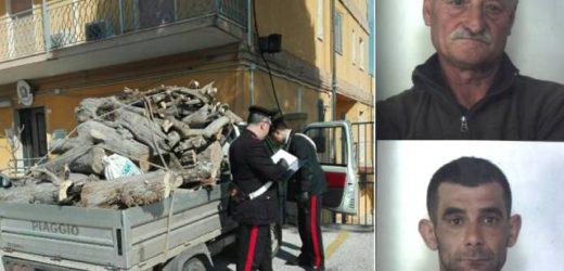 Arrestati dai Carabinieri due siracusani per aver rubato un carico di legna, tagliando gli  alberi, da un fondo agricolo