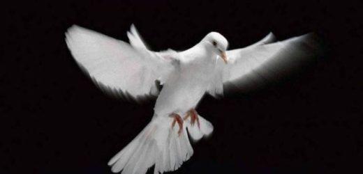 Auguri, per una Pasqua di Pace, Serenità e Speranza