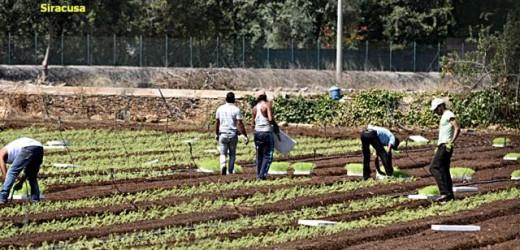 """Operazione della Guardia di Finanza contro il """"caporalato"""" e il lavoro nero in agricoltura. Trovati luoghi insalubri e insicuri"""