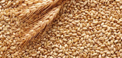 Crisi produttori grano duro, Zappulla (PD) interroga il ministro Martina per l'avvio del piano cerealicolo nazionale